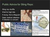 stingray info