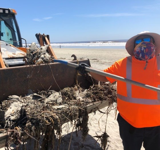 worker removes dead fish from beach